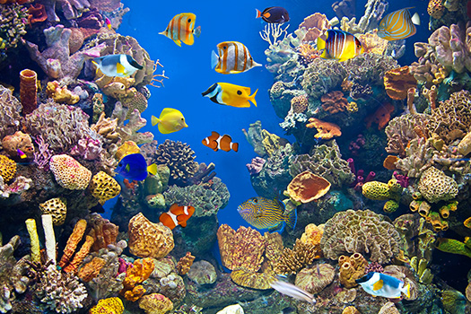 How to Choose the Right Fish for Your Aquarium in San Diego, CA