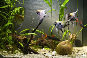 How to Choose the Right Filtration for Your Fish Tank in San Diego, CA