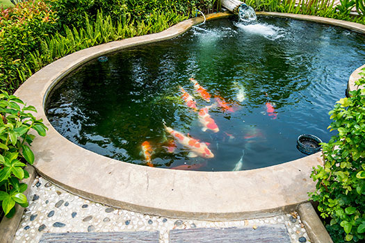 5 Supplies You Need for Your Koi Pond in San Diego, CA