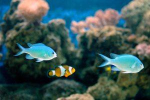 6 Unique Fish to Choose for Your Saltwater Aquarium in San Diego, CA