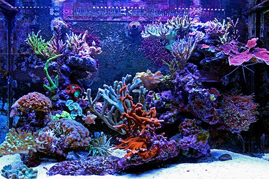 Differences Between Freshwater & Saltwater Aquariums in San Diego, CA