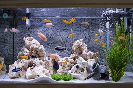 6 Cool Fish to Get for a Freshwater Aquarium in San Diego, CA