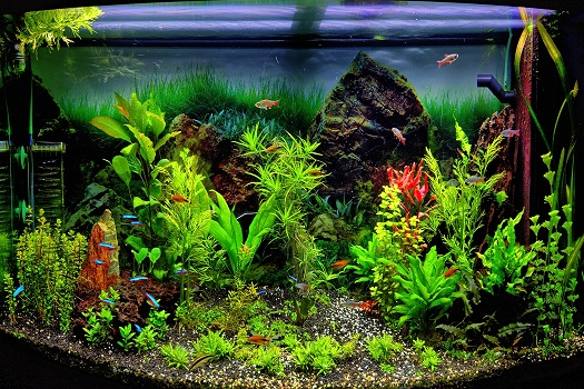 The Basics of Creating a Freshwater Planted Aquarium in San Diego, CA