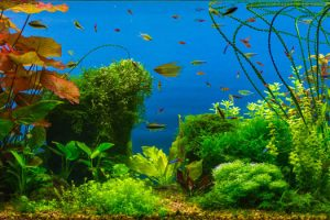 Why Are Freshwater Planted Aquariums the Next Big Thing? in La Mesa, CA