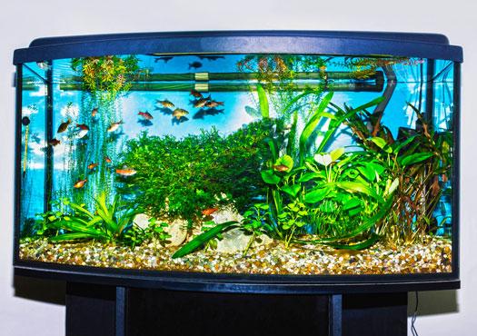Purpose of Aquarium Controllers and Monitors San Diego, CA