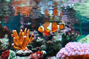 Key Supplies for Saltwater Aquariums in San Diego, CA
