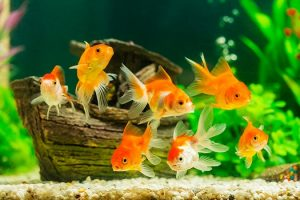 Why Fish Tanks Need Good Bacteria in San Diego, CA