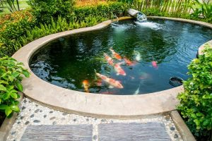 How to Properly Filter a Koi Pond in San Diego, CA