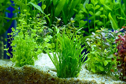 Best Plants for Freshwater Aquariums in San Diego, CA