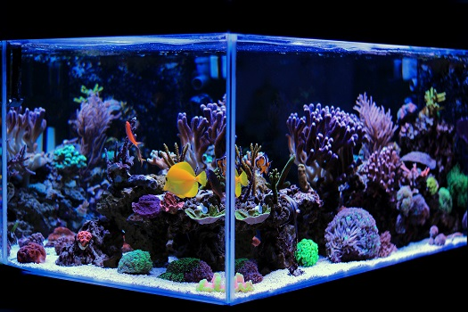 5 Suggestions for New Saltwater Aquarium Owners in San Diego, CA