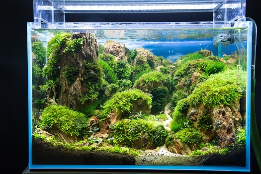 Ways to Take Care of Freshwater Planted Aquariums in San Diego, CA