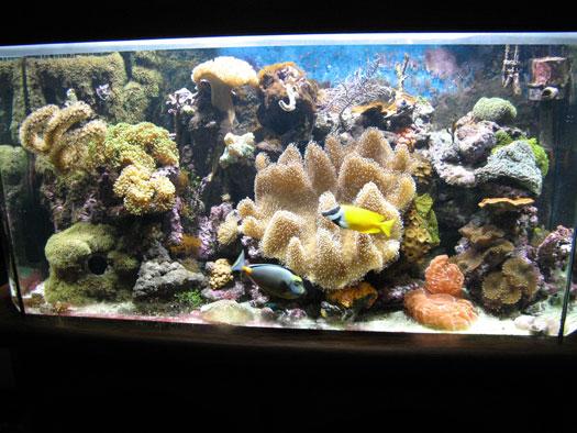 Backup Power for Saltwater Aquarium San Diego, CA
