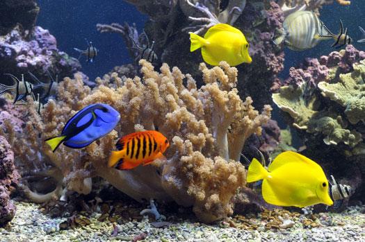 Benefits of Saltwater Fish Tanks San Diego, CA
