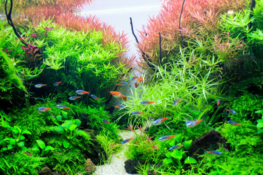 Lots of Plants in Freshwater Planted Aquariums San Diego, CA