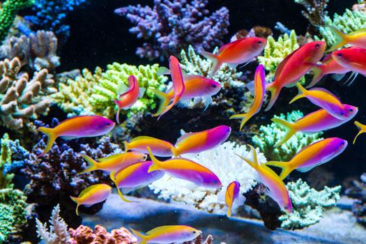 Buying Saltwater Fish Online San Diego, CA