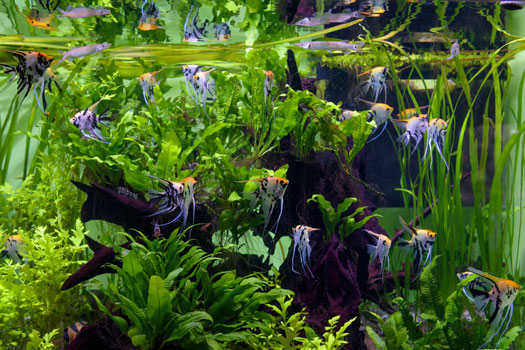 Little-Known Advantages of Freshwater Planted Aquariums San Diego, CA