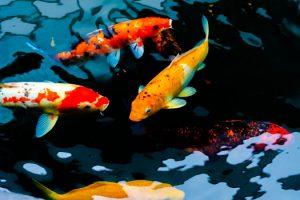 Repairing Tears in Pond Liners San Diego, CA