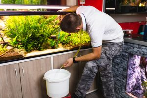 Water Change Frequency in Aquariums San Diego, CA