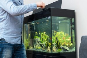 Should You Put Lids on Aquariums San Diego, CA