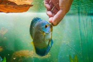 Is It Fine to Put Hands in Aquarium San Diego, CA