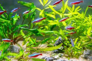 Skittish Behavior of Aquarium Fish San Diego, CA