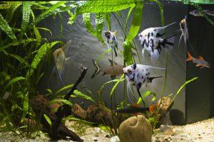 Does Vinegar Kill Aquarium Fish San Diego, CA