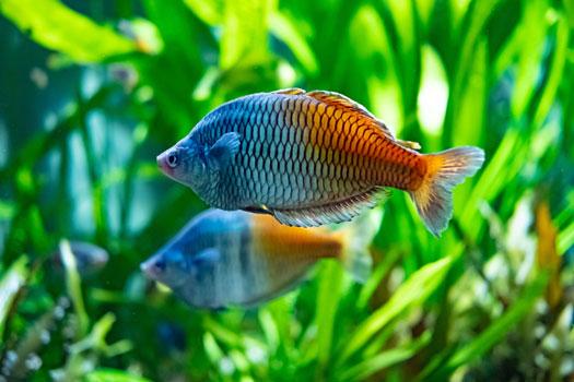 Smartest Fish for Aquariums San Diego, CA