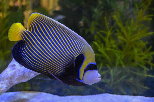 Unusual Fish to Keep in Tanks San Diego, CA