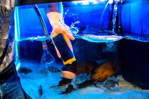 Can You Overclean Aquariums San Diego, CA