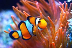 Luckiest Fish for Home Aquariums San Diego, CA