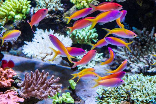 Should You Get Freshwater or Saltwater Aquarium San Diego, CA