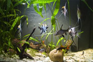 Can You Add Too Much Bacteria to Fish Aquariums San Diego, CA