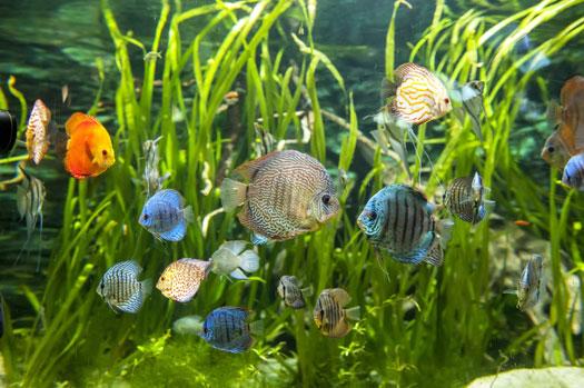 Can Water that's Too Warm Kill Aquarium Fish San Diego, CA