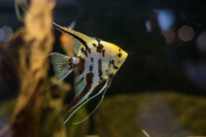 Fish that Live Long Lives in Aquariums San Diego, CA
