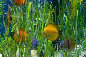 Determining a Cycled Aquarium San Diego, CA