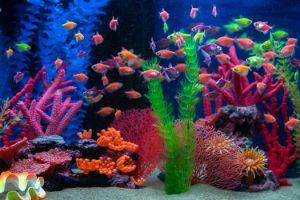Getting Rid of Ammonia in Aquariums San Diego, CA