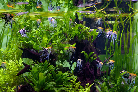 Can You Keep More Fish in Planted Aquariums San Diego, CA