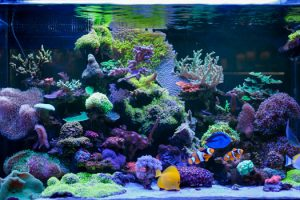 What's Needed for Saltwater Aquariums San Diego, CA