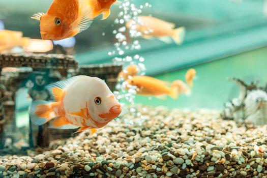 Why Fish Like Bubbles in Aquariums San Diego, CA