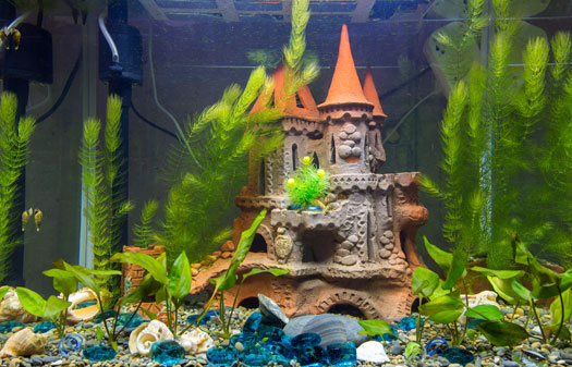 Cool Decoration Themes for Fish Tanks San Diego, CA