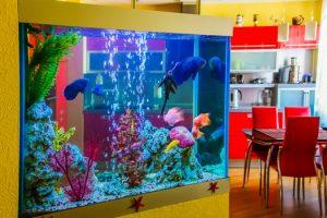 Health Benefits of Having Home Fish Aquarium San Diego, CA
