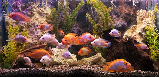 Common Medications for Aquarium Fish San Diego, CA