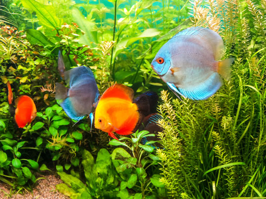 Causes of Plants Dying in Fish Aquariums San Diego, CA