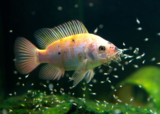 Caring for Baby Fish in Aquariums San Diego, CA