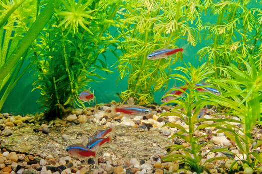 Most Popular Freshwater Aquarium Fish San Diego, CA