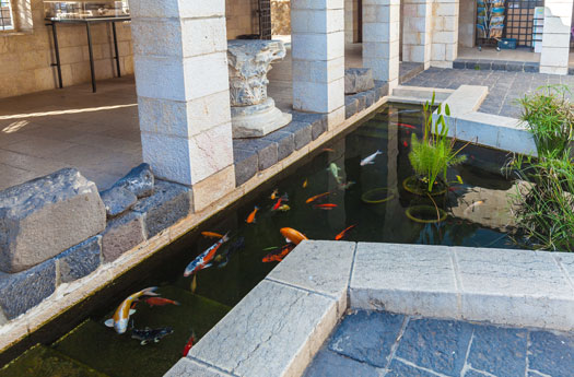 What if You Buy a Home with a Koi Pond San Diego, CA