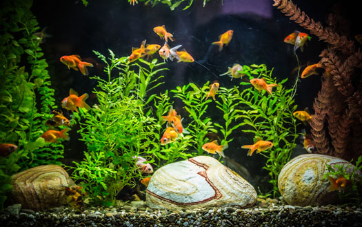 Kill Parasites with Salt in Aquariums San Diego, CA