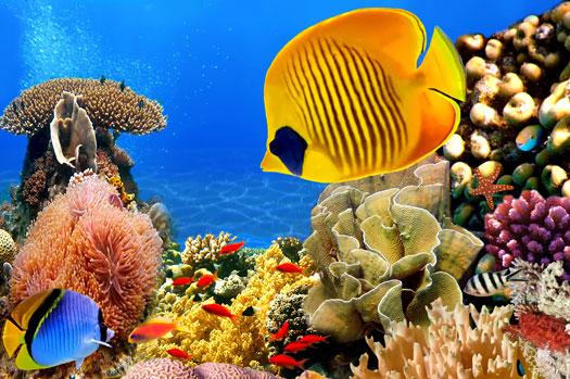 Professional Design for Fish Tanks San Diego, CA