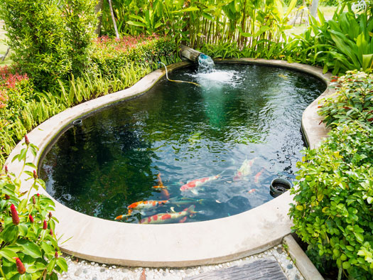 Do You Need Sun or Shade for Koi Ponds San Diego, CA