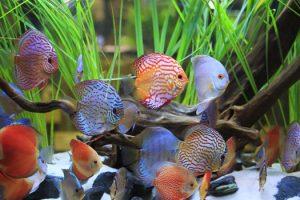 Coolest Freshwater Aquarium Fish San Diego CA